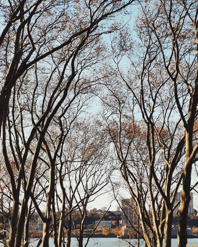 Low angle view of bare trees and buildings against sky