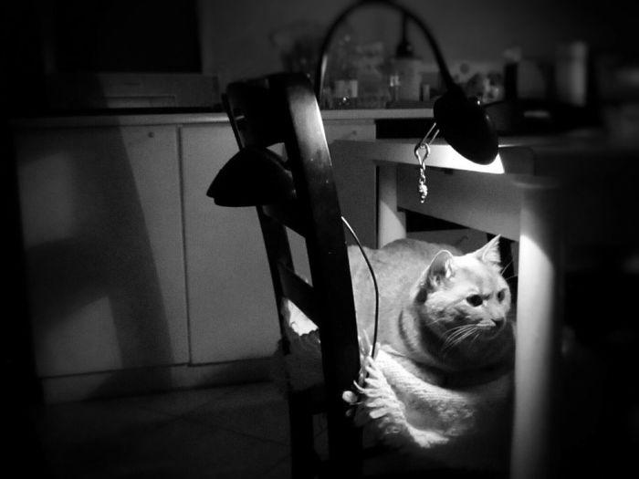 Fuori C'è Il Vento Domenica Uggiosa Gattobello Gatto Tigrato Ombre E Luci Lumière Luce Calda Gatto E Coperta Bianco E Nero