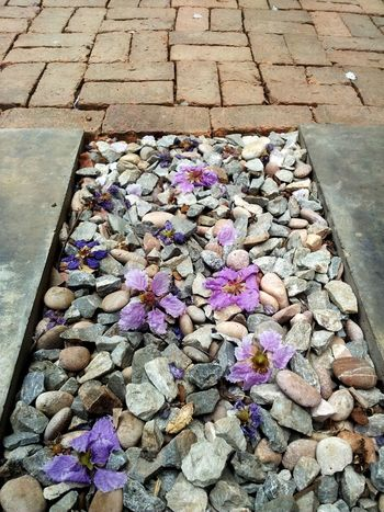 Urban Spring Fever Cobblestone Gutter Sewer Crocus Stone Stone - Object Pebble Beach Water Pollution Stepping Stone Stream Oil Spill Manhole  Pavement Environmental Damage Oil Leaking Pollution Pebble Drain Rock Coast Sewage Blooming Cobbled