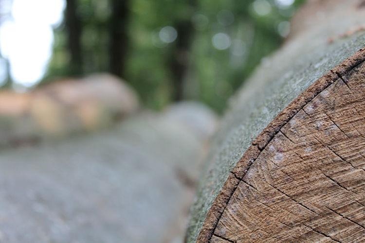 Tree trunks waiting to be pulled away and cut into timber... Close-up Day Deforestation Focus On Foreground Forest Land Log Nature Outdoors Plant Selective Focus Textured  Tree Tree Ring Tree Trunk Trunk Wood - Material
