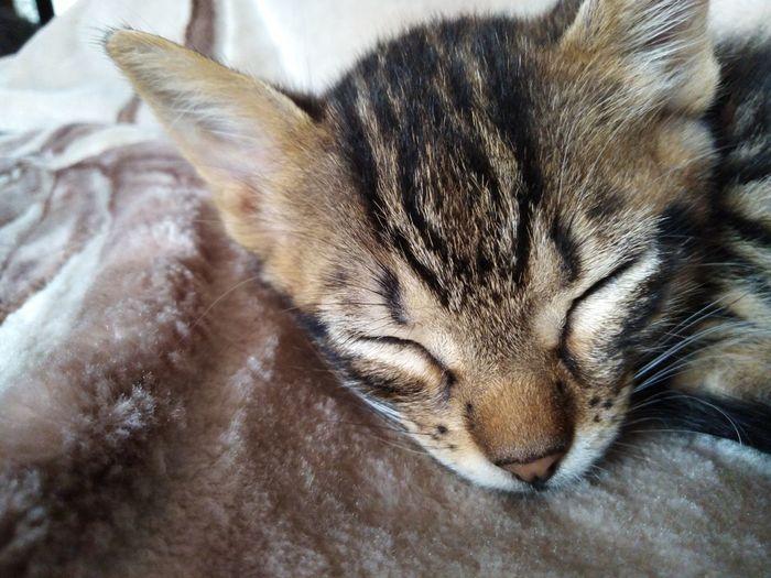 Chat Feline