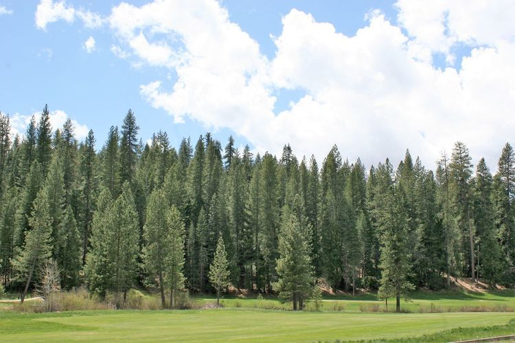 Wawona Golf Course Golf Course Wawona Golf Course Yosemite National Park Beauty In Nature Coniferous Tree Day Field Forest Golf Course Photography Golf Course View Grass Green Color Growth Land Landscape Nature No People Non-urban Scene Pine Tree Plant Scenics - Nature Sky Tranquil Scene Tranquility Tree