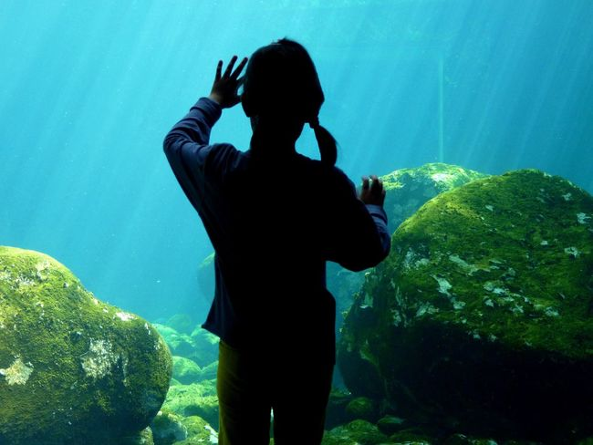Aquarium Blue Color Bristol Zoo Bristol, England Day Girl Green Color Lifestyles Light And Shadow Looking At Nature One Person People Photographing Ponytail Raised Hands Real People Rocks Rocks And Water Sun Rays Underwater Underwater Rocks Vivid Colours