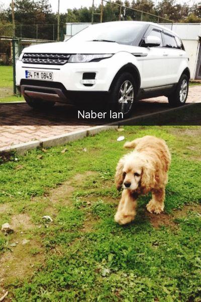Rangeroversport Afacan Dag Evi  Happy Dog