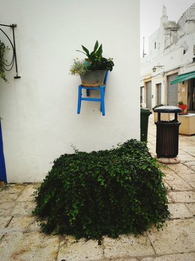 Potted Plant Green Color No People Plant Built Structure Architecture Growth Day Outdoors Building Exterior Cisternino Puglia Italy🇮🇹