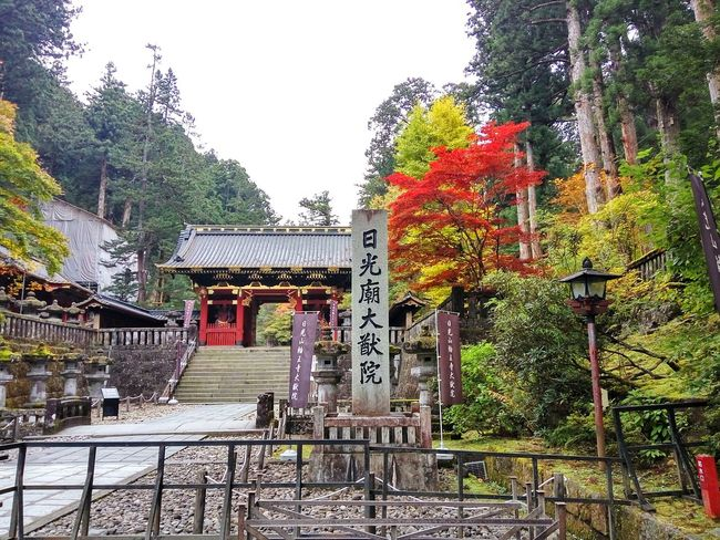 Japan Japanese Temple Japanese Tradition Amazing Japan 紅葉 Autumn colors Autumn Leaves Tree Outdoors Day No People Built Structure Architecture Sky Nature