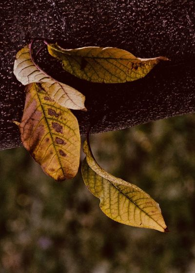 autumn colors Plant Part Leaf Autumn Change Close-up Yellow Nature Focus On Foreground Leaf Vein Leaves Autumn Collection Natural Condition Falling Outdoors Tree Dried Plant Fragility Beauty In Nature Mood Fall Forest