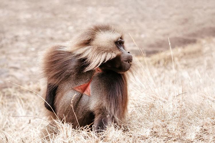 Portrait of a monkey sitting on field