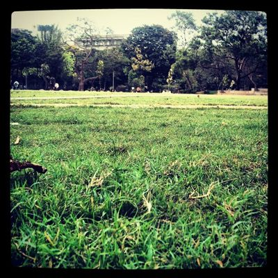 Nature Kjsce Grass Cool calm ambience