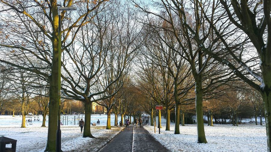 Bare trees in park during winter