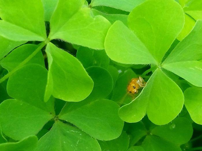 Natalie Portman Natasha Yermak Neha  Simran Babygirl ShonaliPaul :) Divyanka Nature_collection Insects  Leafs