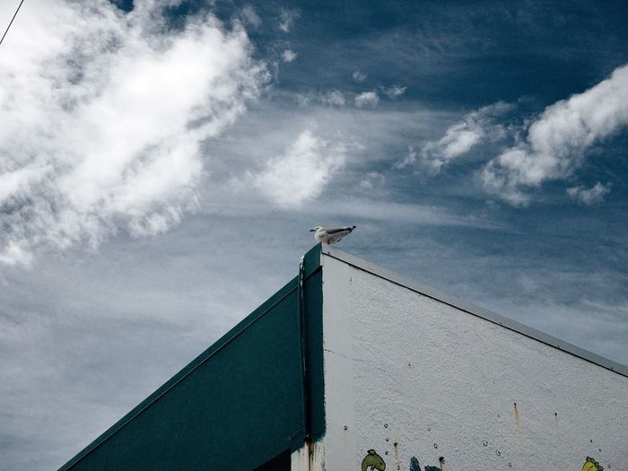 Low angle view of seagull perching on building roof against sky