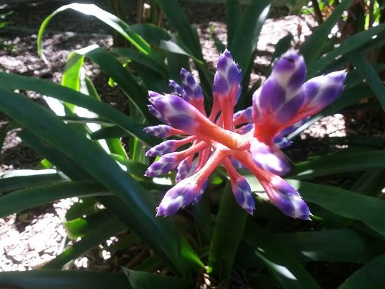 Beautiful Nature The Purist (no Edit, No Filter) Flowers