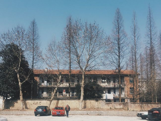 Tree Trees Branch Bare Tree Winter Car Park Clear Sky Outdoors Architecture Building Exterior Built Structure