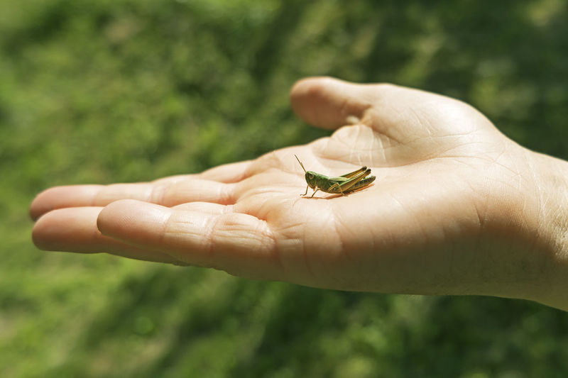 Close-up of hand holding small leaf