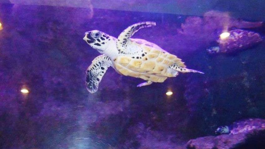 •tartaruga• Turtle Tortuga Mexico ParqueNacional Animals Riviera Maya
