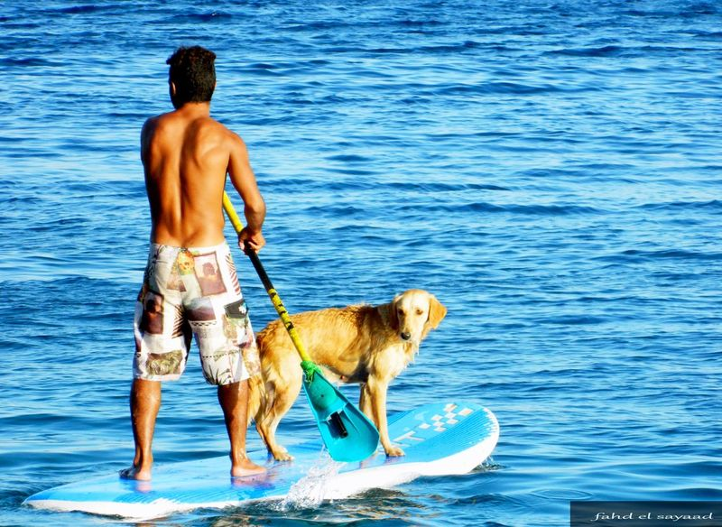 Dogs Dogs Love Sea Water Swimming Relaxation Blue Sunlight Vacations Tree Real People Outdoors Day People Beach Sky Nature Sea Arch First Eyeem Photo Black And White Photography Music Brings Us Together Music Light In The Darkness Light And Shadow Light Party People Photography Photography Portrait Sunshine Hands Handwork Hands Of Nature Sand Chilling Egypt Camping Dessert follow #f4f #followme #TagsForLikes #TFLers #followforfollow #follow4follow #teamfollowback #followher followbackteam followh Followme