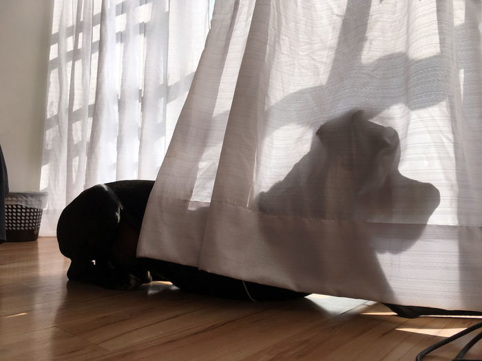 Dog sitting against curtains at home