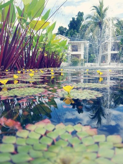 Pond Water Water Feature Up Close Water Feature Up Close Lily Pad Fountain Lilypads Low Angle View Lake Flower Yellow Flower Yellow Green Leaves Water Reflections Water Plant Small Petals Reflection Reflections In The Water Water Leaf Nature Reflection Tree No People Growth