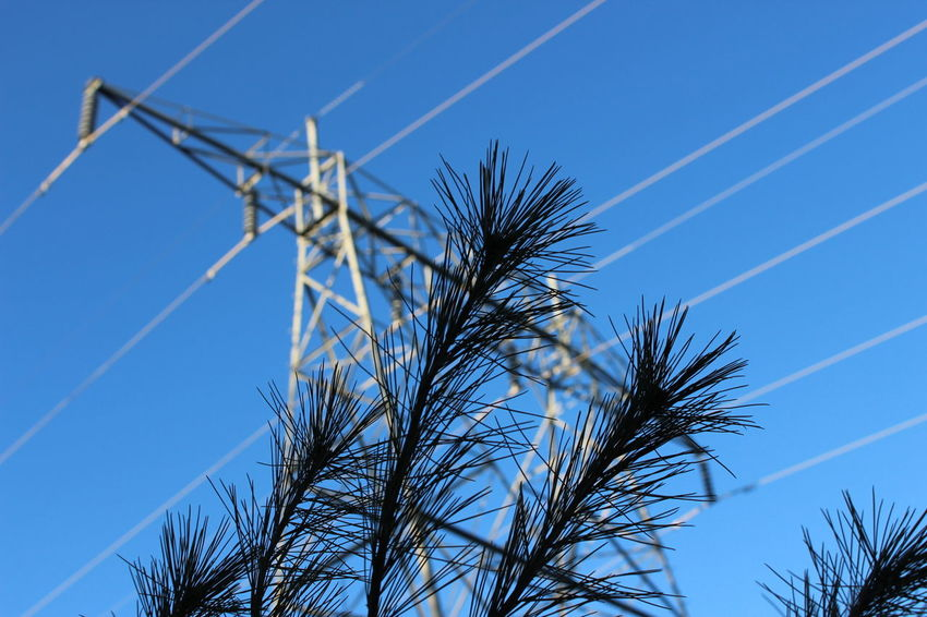 Giants of a Different Kind Low Angle View Sky Clear Sky Electricity  Tree Low Angle Canon 1300d Beauty In Nature Tree Close-up Macro Macro Photography Forest Power Lines High Tension Power Cable Blue Sky Blue Skies Silhouette Art Is Everywhere
