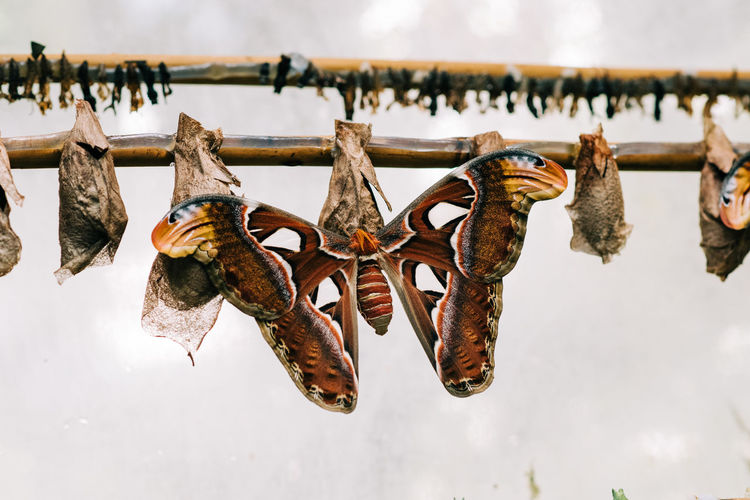 Close-up of butterfly perching on wood against sky