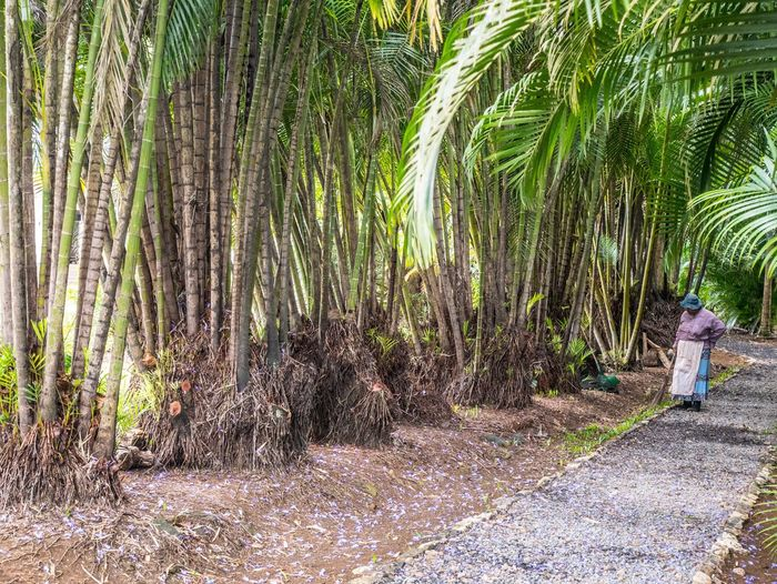 Rear view of man walking on palm trees in forest