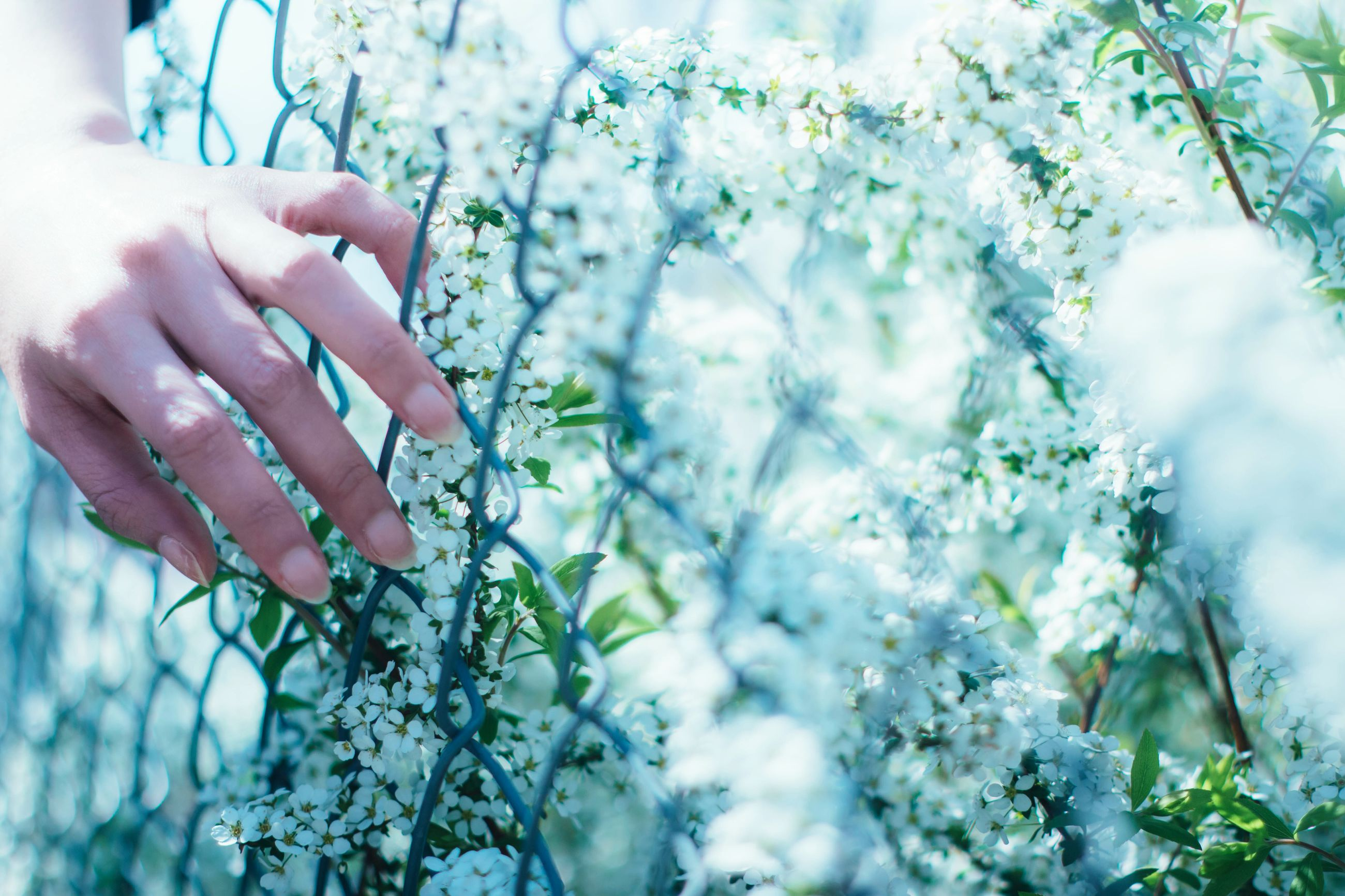 human hand, tree, human body part, leaf, outdoors, one person, growth, holding, plant, nature, day, women, close-up, branch, flower, real people, adults only, people, adult, freshness