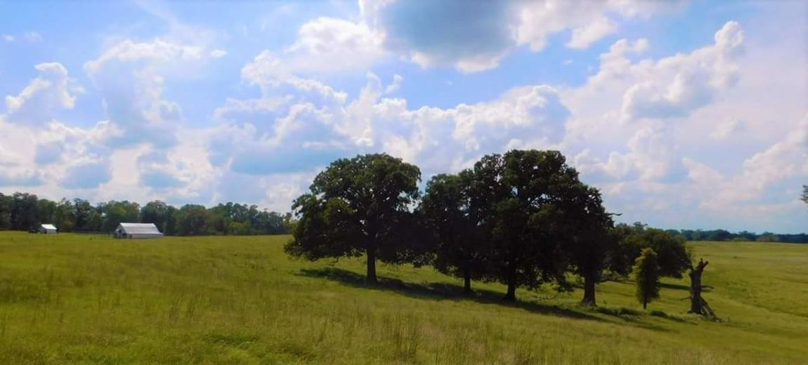Texas landscape. Old metal barn. Tree Landscape Tranquil Scene Field Tranquility Green Color Grass Sky Scenics Beauty In Nature Growth Nature Cloud Rural Scene Non-urban Scene Solitude Day Agriculture Single Tree Outdoors Texas Landscape Old Barn Collection Barnfield Countryside