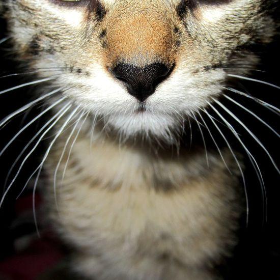 ~Precious Foster Kitten~ Feline Whisker Kittens Of Eyeem Kitten Love Kittens Precious Pets