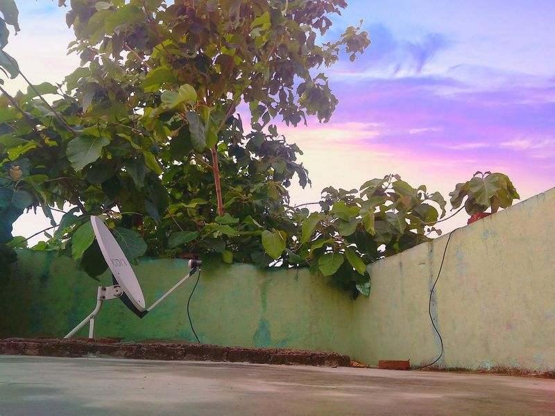 Beautiful Sunset♥♥Good Evening EyeEm Tree Water City Sky Prickly Pear Cactus Plant Life