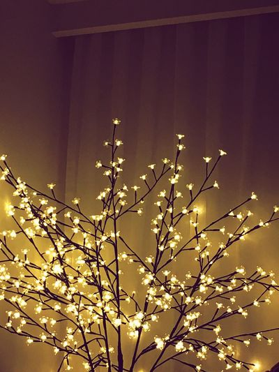 Lights Tree Lights Shine Low Angle View No People Nature Branch Illuminated Growth Leaf Plant Night Beauty In Nature Tree Sky Close-up Paint The Town Yellow