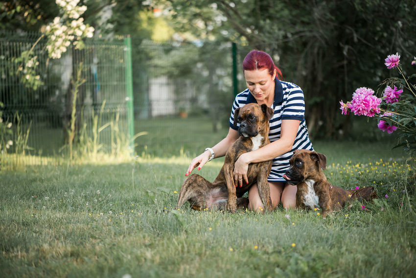 Young adult beautiful woman playing with two cute boxer dogs in the green garden Two Boxer Dogs Boxer Dogs Pets Owner Playing Outdoors Green Grass Domestic Animals Domestic Domestic Dogs Happy Cute Cute Pets Beautiful Woman Female Fun Love Human And Animals Brown Canine Portrait