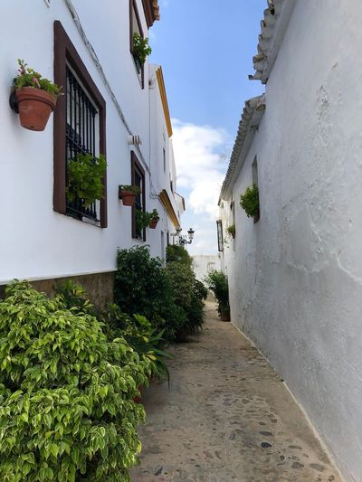 España SPAIN Andalucía Medinasidonia Architecture Building Exterior Built Structure Building Sky Plant Residential District Nature The Way Forward House City Wall - Building Feature Street