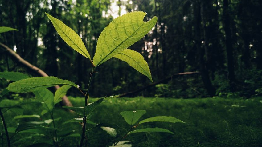 Mobilephotography Tree Leaf Close-up Plant Green Color Leaf Vein Leaves Natural Pattern