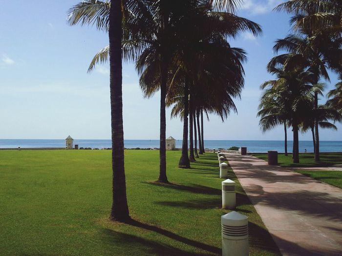 Bahamas Palm Trees