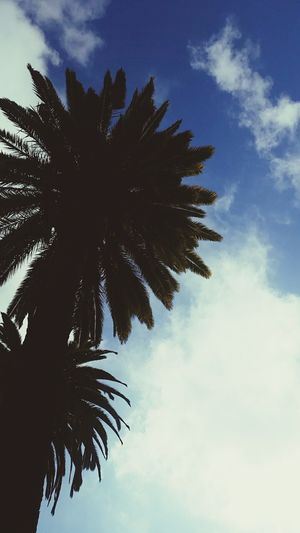 """""""Grant, Oh gods, that I may have little and feel the need of nothing"""" First Eyeem Photo Nature Palm Trees Sky Energy Consciousness Colors Essence"""
