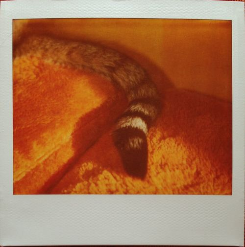 My Cat Cat Tail Polaroid Spectra