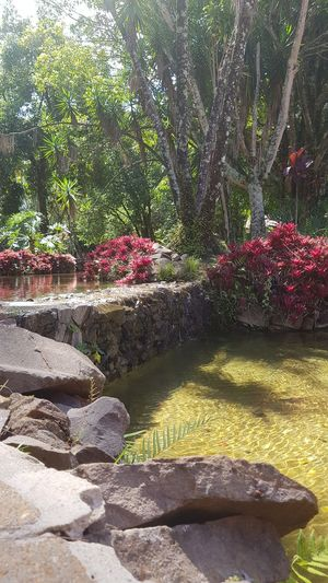 #sunny # picture #lovepicture #Brazil #crystal clear water Water Flower Plant Life Botanical Garden