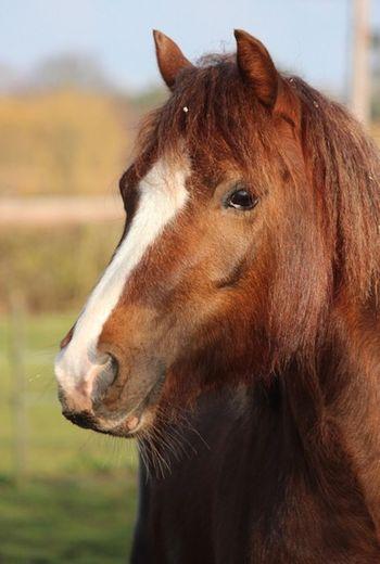 Animal One Animal Horse Animal Themes Animal Wildlife Mammal Vertebrate