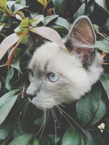 Le gustan los arboles Cat♡ Gato Gatito Gato😽 Cat Photography Cats Of EyeEm Domestic Cat Pet Photography  Cats 🐱 Pet Facatativa Feline Cat Cat Lovers Pets