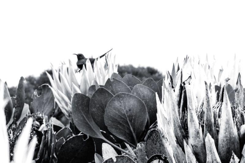 Nature Plant No