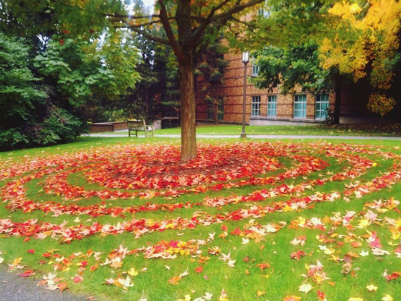 Campus Back To School Fall Leaves Autumn Leaves Patterns Natural Art  Autumn Colors