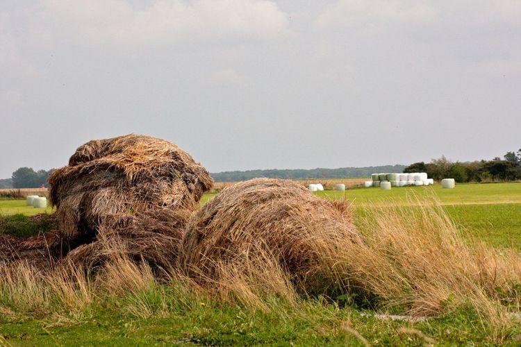 Agriculture Agriculture Agriculture Photography Bale  Beauty In Nature Deutsche Insel Field Grass Hay Hay Bale Haystack Landscape Nature Nature Photography Naturelovers No People Outdoors Rügen Rügen Lovers Rügenliebhaber Sky Stroh Strohballen The Still Life Photographer - 2018 EyeEm Awards
