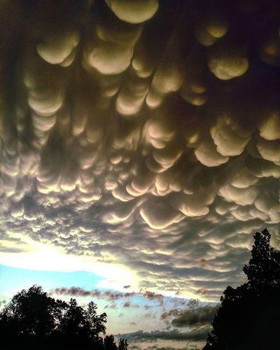 Very odd shaped storm clouds tonight... I love storm season!! Skywatcher Sky Clouds Outdoors MinnesotaSkies Skyandclouds  Cloudsandsky Stormclouds Stormyskies Stormchasing Stormwatching Storm Sunset My Cloud Obsession☁️ My Cloud Obsession ☁ My Cloud Love☁⛅ Mammatus Clouds Mammatus Brainerd, MN