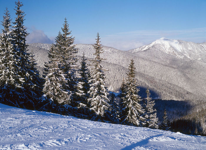 Cold Temperature Forest Landscape Mountain Mountain Range Mountains Nature No People Outdoors Scenics Slovakia Snow Snowcapped Mountain Spruce Spruce Forest Spruce Tree Spruce Trees Tatry Tatry-Slovakia Tree Winter Winter