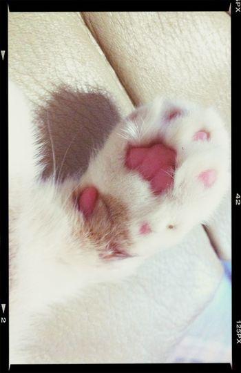 Nyan~ <3 Paws Cat Cats