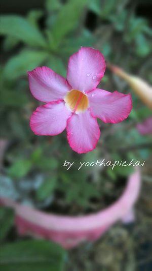 Flower in macro mode by asus zenfone 6 Flowers Thailand Zenfone6 Asus Macro