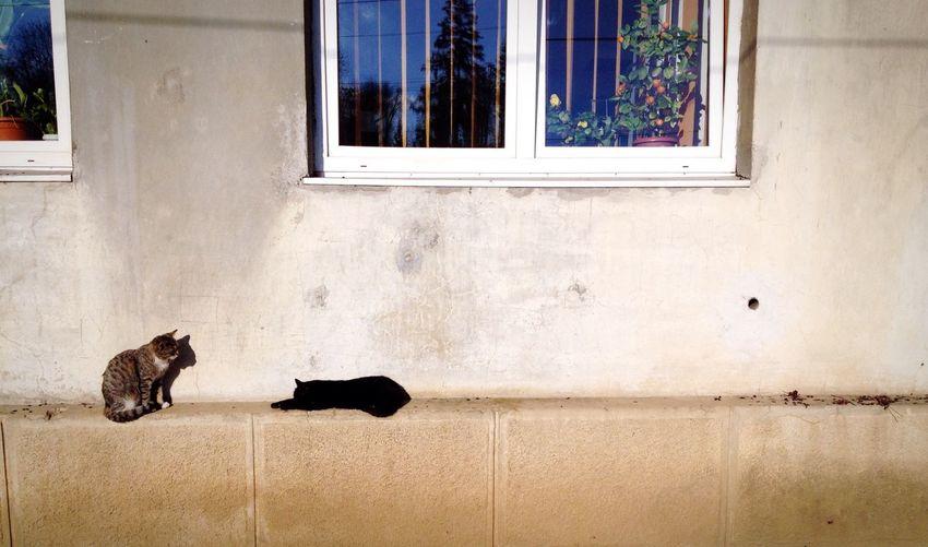 Cats Sun