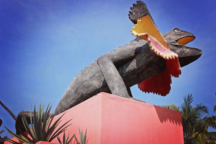 Iguana Nong Nooch Tropical Bothanical Garden Thailand Colorful Outdoor Photography Outdoors Theme Park