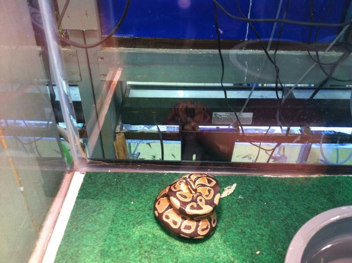 I Want This Python (sp) So Bad..